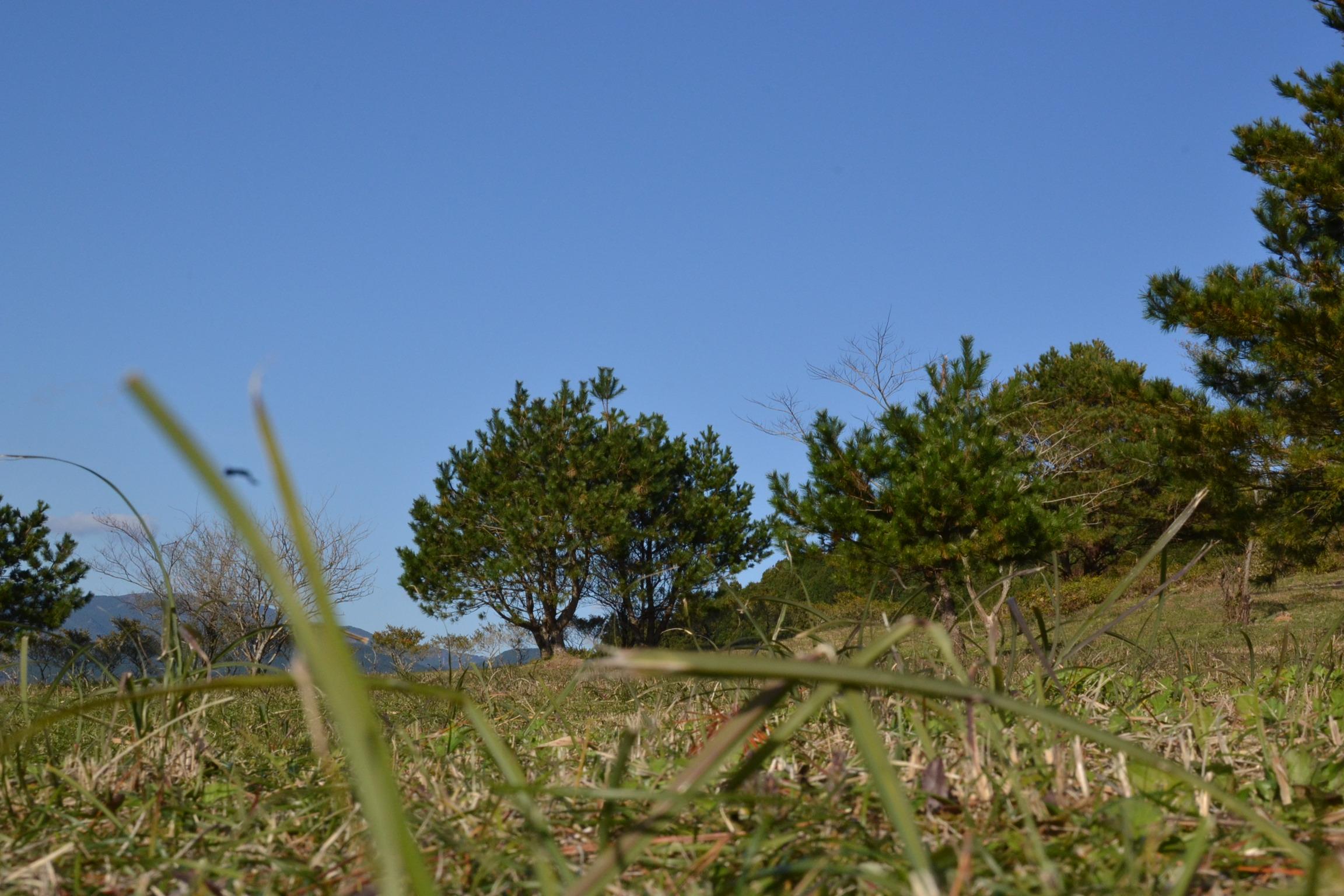 甫喜が峰 キャンプ 記念の森